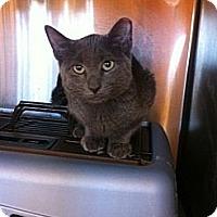Adopt A Pet :: Driggs - Secaucus, NJ