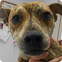 Adopt A Pet :: Skippy - Arenas Valley, NM