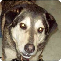 Adopt A Pet :: WOOBIE - kennebunkport, ME