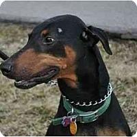 Adopt A Pet :: Titan--adopted! - New Richmond, OH