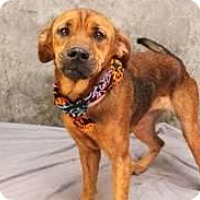 Adopt A Pet :: Lucy - Hastings, NY