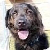 Adopt A Pet :: Baxter - New Boston, NH
