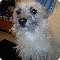 Adopt A Pet :: Toto - Chicago, IL