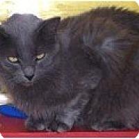 Adopt A Pet :: Aslan - El Cajon, CA