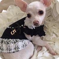 Adopt A Pet :: Chanel - Lynnwood, WA