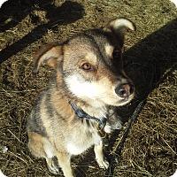 Adopt A Pet :: Rossco - Egremont, AB