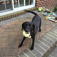 Adopt A Pet :: Luna - Manhasset, NY
