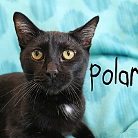 Adopt A Pet :: Polaris - Wichita Falls, TX