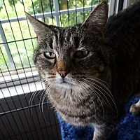 Adopt A Pet :: MISS KITTY - Willows, CA