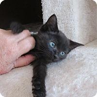 Adopt A Pet :: Arrow - San Bernardino, CA