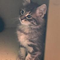 Adopt A Pet :: Robyn - Half Moon Bay, CA