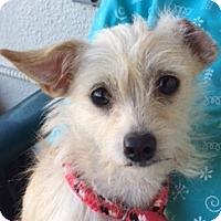 Adopt A Pet :: Scraps - Canoga Park, CA