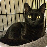 Adopt A Pet :: Bethany - East Brunswick, NJ