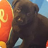 Adopt A Pet :: Ava - Vacaville, CA