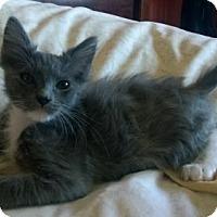 Adopt A Pet :: Gremlin - Burlington, WA