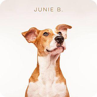 Hound (Unknown Type) Mix Dog for adoption in San Francisco, California - Junie B