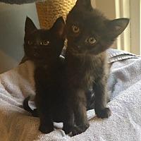 Adopt A Pet :: Zach and Cody - Fairfax, VA