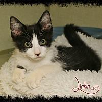 Adopt A Pet :: Linkin - Shippenville, PA
