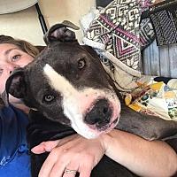 Adopt A Pet :: Ruby - Rockford, IL