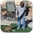 Photo 2 - American Bulldog Puppy for adoption in LAS VEGAS, Nevada - Nani