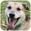 Photo 2 - Labrador Retriever/Boxer Mix Dog for adoption in Avon, New York - Kelly