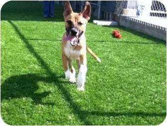 Retriever (Unknown Type) Mix Dog for adoption in Galveston, Texas - Champ