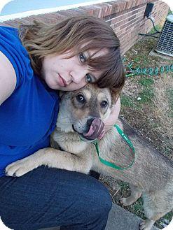 Shar Pei/Husky Mix Puppy for adoption in Mira Loma, California - Cleo in Kentucky