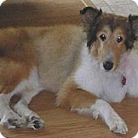 Adopt A Pet :: Cara, AKA Ellie - Minneapolis, MN