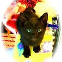 Adopt A Pet :: Paul Bunyon - Shelton, WA