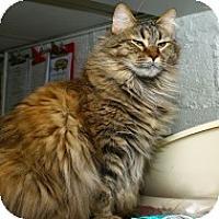 Adopt A Pet :: Tippi - Lombard, IL