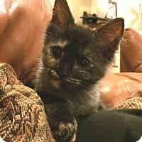 Adopt A Pet :: Cookie - Chandler, AZ