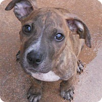 Adopt A Pet :: Baby Sully - Oakley, CA
