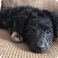 Adopt A Pet :: Lucky - Hamilton, ON