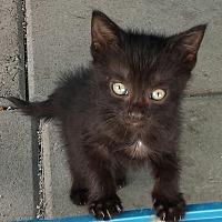 Adopt A Pet :: Billy - Snow Hill, NC