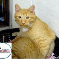 Adopt A Pet :: Twinkie - Belleville, MI