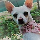 Adopt A Pet :: Daisy  Mae