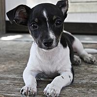 Adopt A Pet :: Barney - Winters, CA