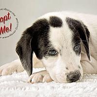 Adopt A Pet :: Skip - Gillsville, GA
