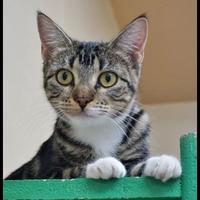 Adopt A Pet :: Lilly - Wickenburg, AZ