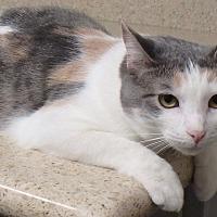 Adopt A Pet :: Tawny - Seguin, TX