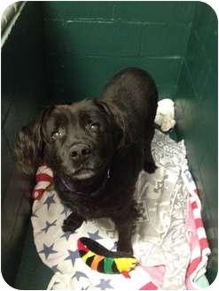 Retriever (Unknown Type) Mix Dog for adoption in Wasilla, Alaska - Kodi
