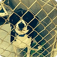 Adopt A Pet :: Hunter - Schererville, IN