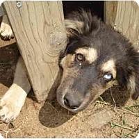 Adopt A Pet :: Feefee - Fowler, CA