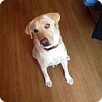 Adopt A Pet :: Maggie - Kingwood, TX