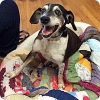 Adopt A Pet :: Louise - Homewood, AL