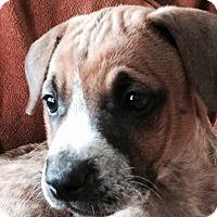 Adopt A Pet :: Emma - Mount Juliet, TN