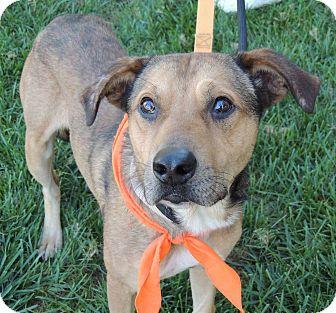 Retriever (Unknown Type)/Shepherd (Unknown Type) Mix Dog for adoption in Lincolnton, North Carolina - Pokey Euth Nov 16 Hurry!