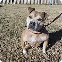 Adopt A Pet :: Dolly - Hamburg, PA