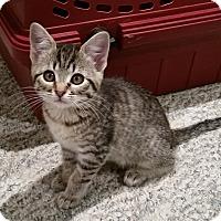 Adopt A Pet :: Faith - Portland, OR