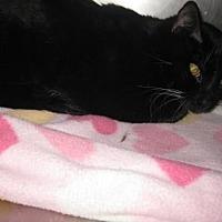 Adopt A Pet :: Duncan - Roseville, CA
